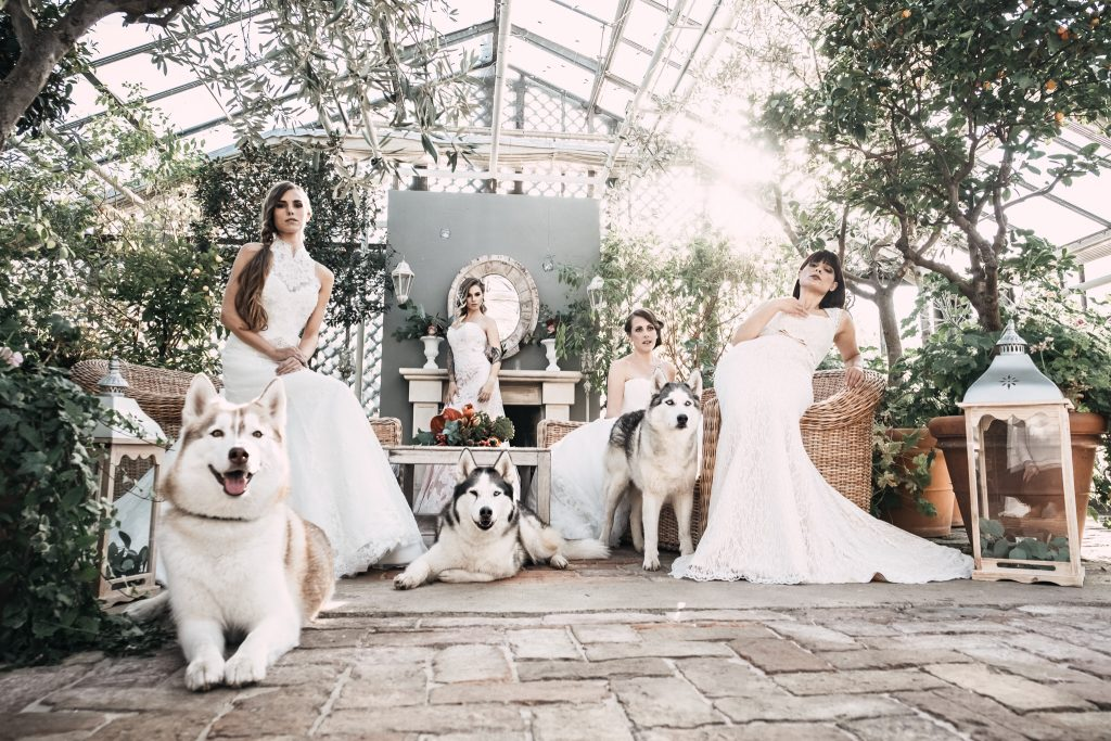 Brides-with-Huskies